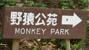 Jigokudani park