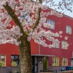 Kersenbloesemfeest in de Regenboogbuurt, Almere